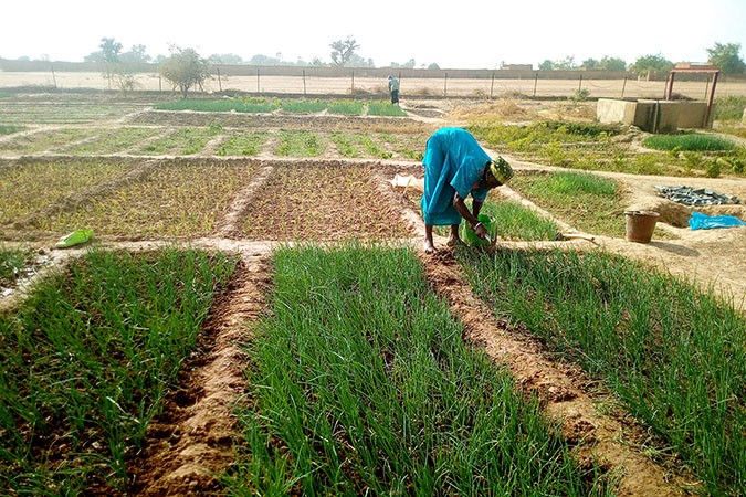 Women farmers cultivating in shallots. Photo: UN Women