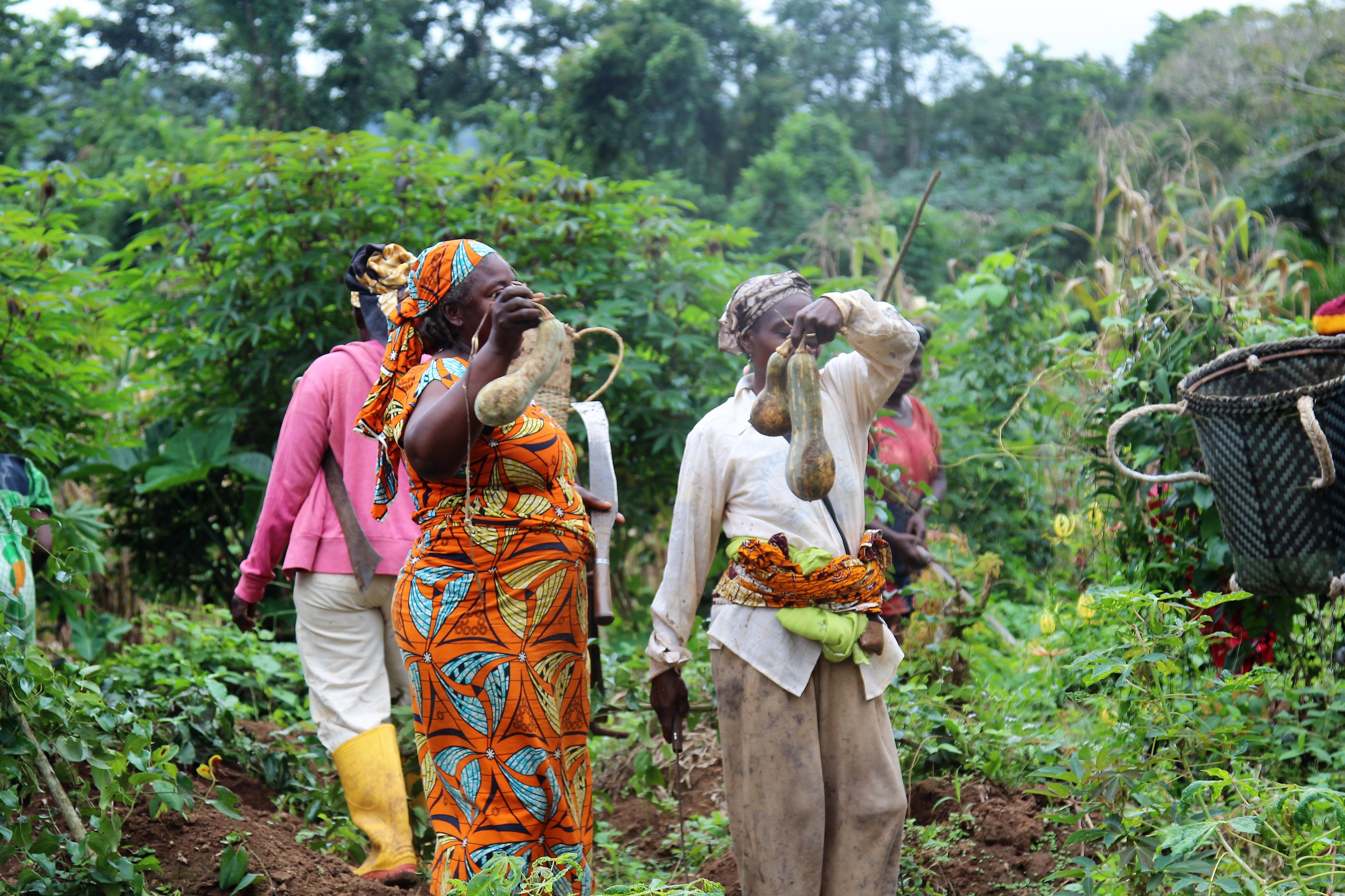 Securing rural women's access to land in Cameroon