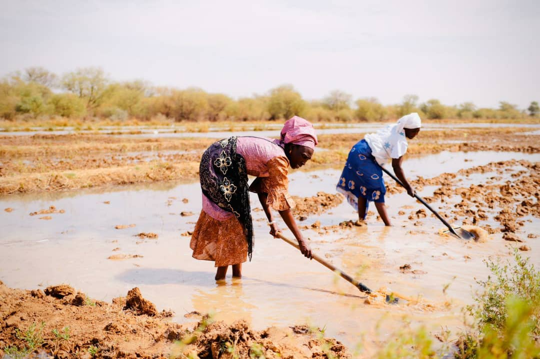 COVID-19 response: UN Women puts women farmers in Senegal at the heart of the solution