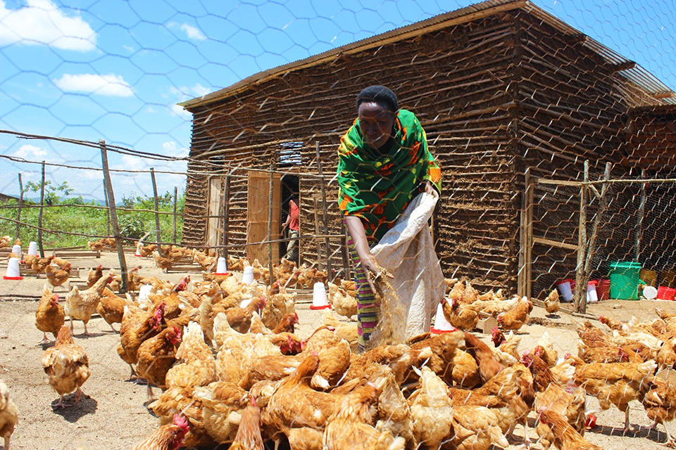 A-chicken-farm-supported-by-UN-Women-in-partnership-with-WPHF-and-owned-by-women-mediators-in-Ruyigi.-Photo-@UNWomen-Bdi_-February-2018_webopt