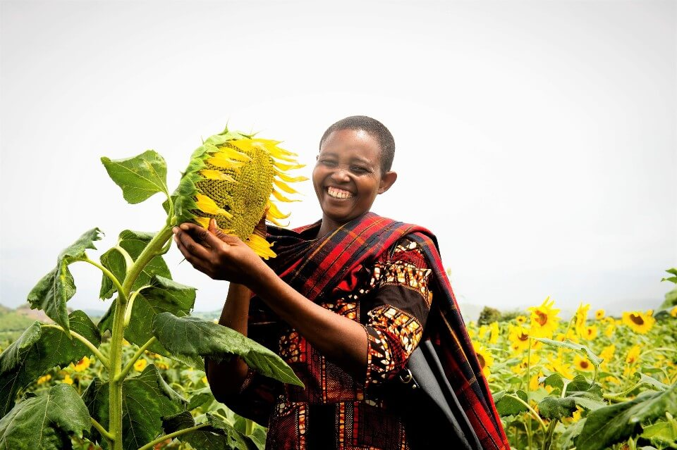 In the Singida region of Tanzania, sunflower women farmers receiving support from UN Women are expecting better profits this season due to a high demand for sunflower oil triggered by last season's low production. Photo: FarmAfrica.