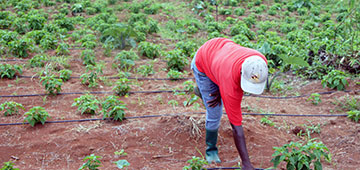 Caribbean farmer uses water management system.