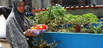 Eman Nofal collects vegetables from her rooftop garden [FAO/M. El Shattali]