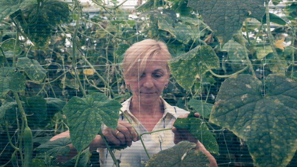 Keti Tomeishvili working in her greenhouse. Photo: UN Women/Tako Robakidze