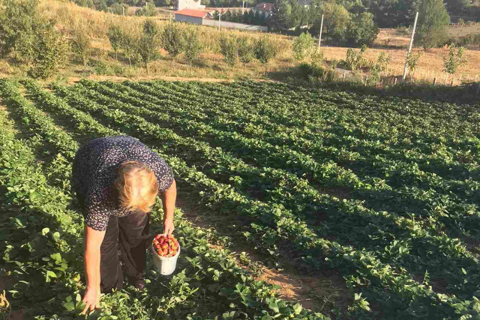 """Shkurte Rrustemi, a farmer from the village Babaj, Kosovo been farming her land most of her life, cultivating healthy food for her family. Photo: Women's Business Association """"She-Era"""""""