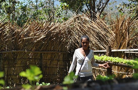 Sowing seeds, reaping income and independence, in Timor-Leste