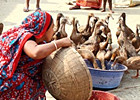 Gender equality women s empowerment and climate change