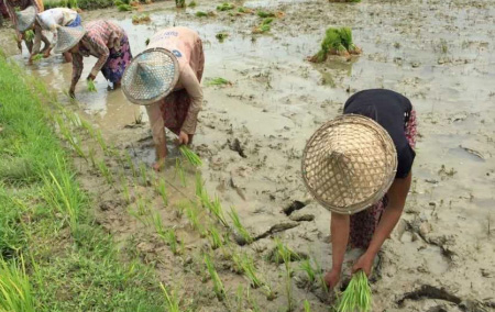 Women farmers in Mrauk U Township trained to produce climate-smart rice seeds. Photo: UN Women Myanmar