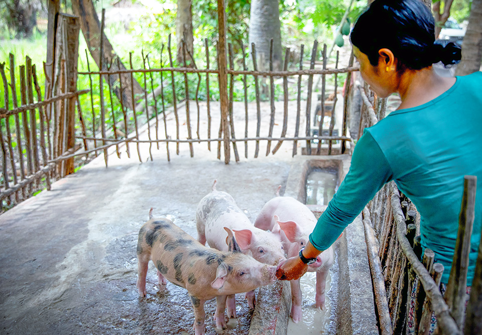 Kongkea, pictured feeding her piglets, hopes to soon expand her pig-rearing business. Photo: UN Women/Stefanie Simcox