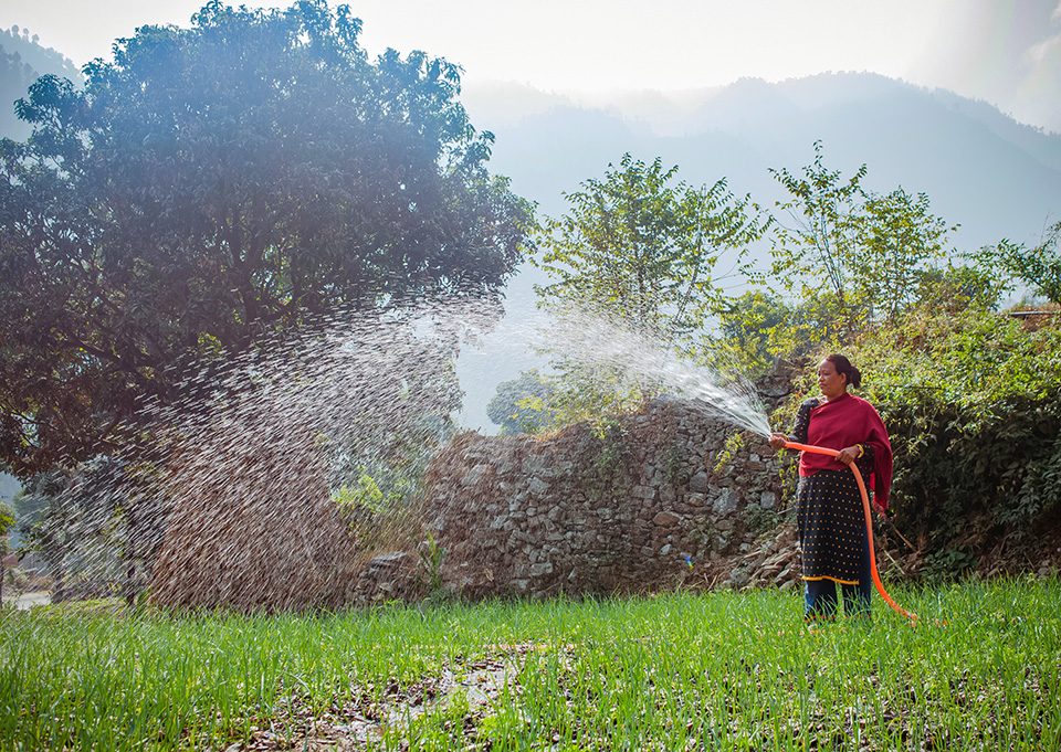 Tamang has loved farming since childhood. And recent training provided by UN Women has made it more profitable as well. This photo was taken in Roshi village in December 2018. Photo: UN Women/Merit Maharjan