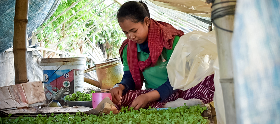 Vegetable gardens bring veritable gains for women in climate-struck Cambodia