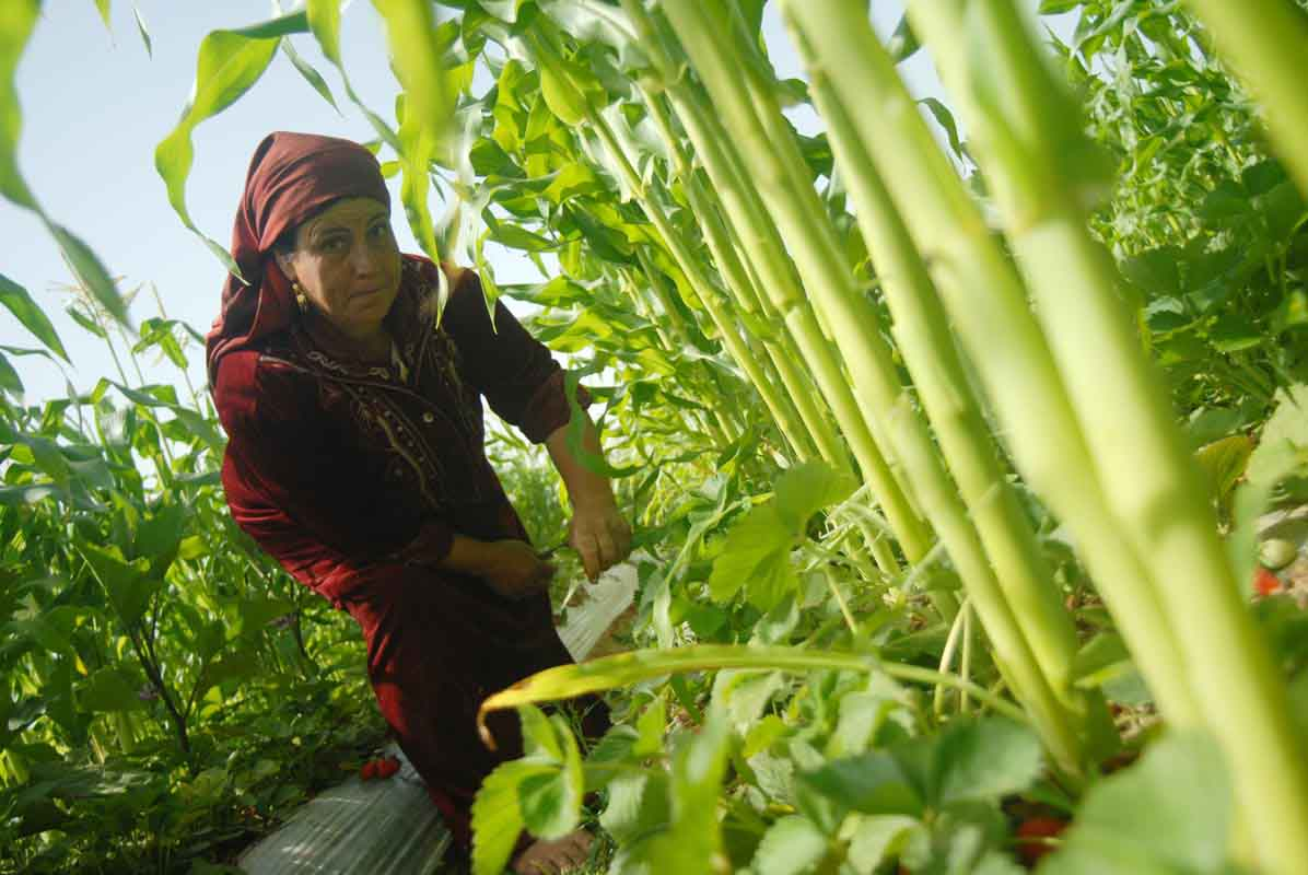 Gazan Women in a field (photo: UN Women)