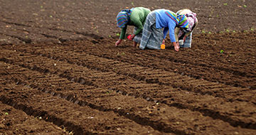 Three women plant seeds in a farm in Chimaltenango, Guatemala. Photo: Maria Fleischmann / World Bank