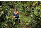 Photo essay: Growing coffee, sowing peace in Colombia