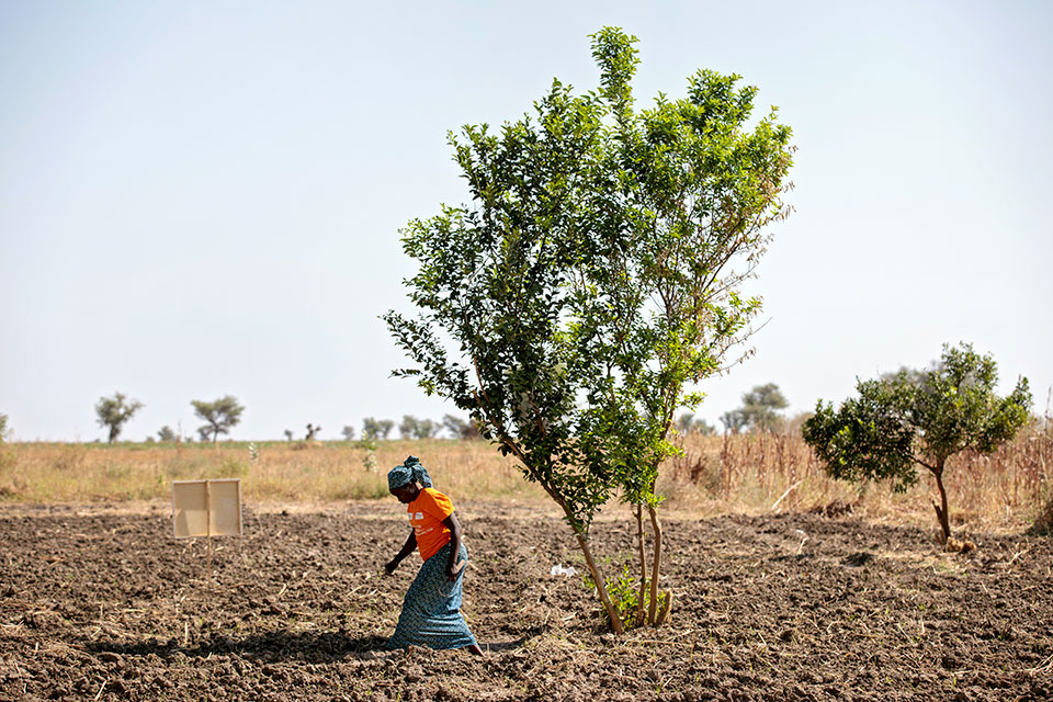 Kuda Mariam tends to her newly-planted garlic crop, north of Maroua. Photo: UN Women/Ryan Brown