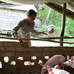 Mom feeding her pigs. Photo courtesy of Cambodia Health Education Media Service (CHEMS) and Cambodian HIV/AIDS Education and Care (CHEC)