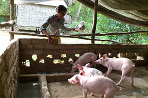 Mom feeding her pigs. Photo courtesy: Cambodia Health Education Media Service and Cambodian HIV/AIDS Education and Care.