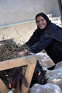 Hajja Zeinab, member of the cooperative, happily working and preparing food for sheep and cattle, at the cooperative at Al Tod village, Luxor governorate, Egypt. Photo: UN Women/Fatma Yassin
