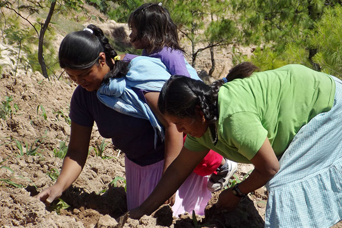 Rural women carrying out agricultural production activities on allotments.  Photo courtesy of the Instituto para las Mujeres en la Migración.