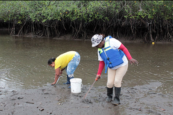 Women in the process of collecting shells. Photo: UN Women