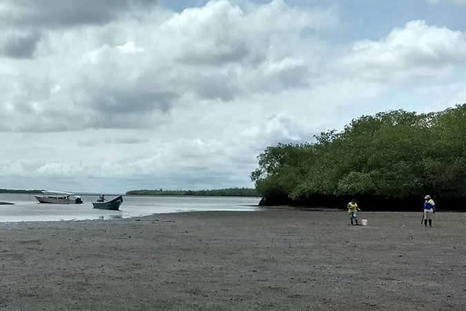 One of the mangrove swamps where women perform the work of shelling, fishing. Photo: UN Women