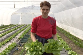 "Dalida Macura, coordinator of ""Good Garden"", taking care of the organic lettuce in a greenhouse. Photo: UN Women/Bojana Barlovac"