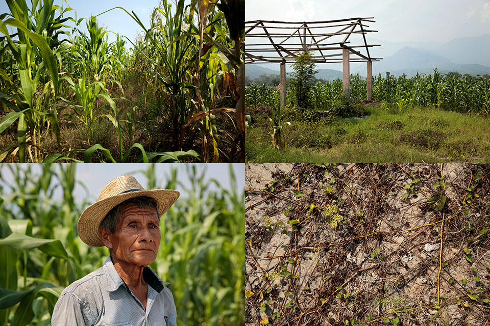 Scenes from Finca Tinajas, site of mass graves, where cornfields, broken concrete patches, overgrowth and the farmhouse used by the military stand now. Military killings of civilians took place there in the 80s, exhumations occurred in 2012, and remains from 51 bodies were found on-site. Don Pablo, farmworker who helped identify bodies . Photos: Ryan Brown