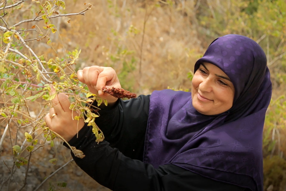 Ibtissam Jaber picking Sumac berries. Photo courtesy of the Lebanon Family Planning Association for Development & Family Empowerment / Mohammad Fawaz