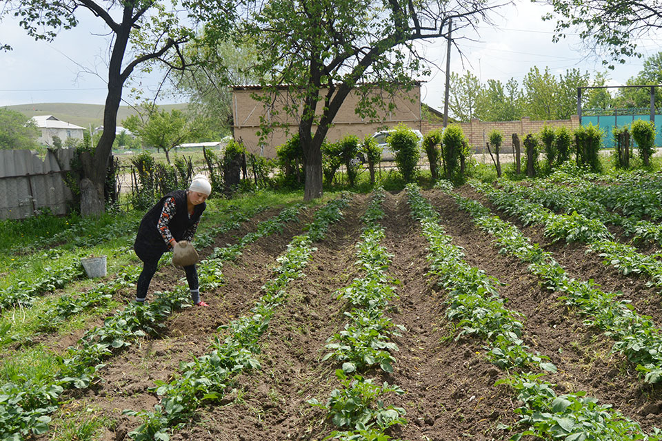 Rural women are working in the fields. Photo credit: Rural Advisory Service