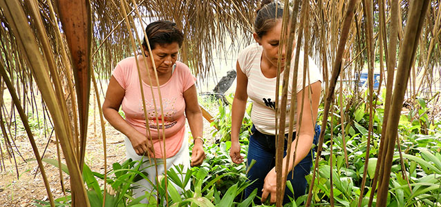 In the northern Bolivian Amazon, a sustainable venture is involving the local community in processing wild fruits from the Amazon jungle, and at the same time, protecting the forests against felling of trees and pollution. Photo: UN Women/Teófila Guarachi.