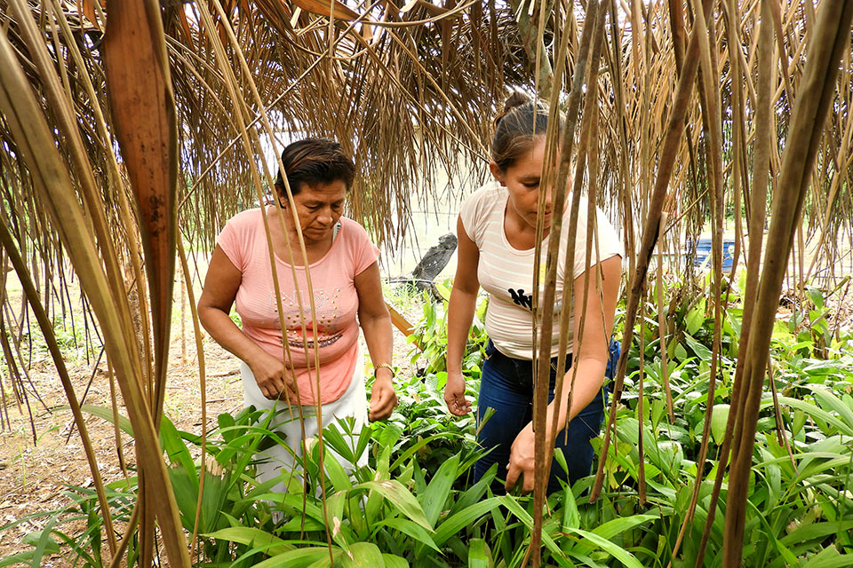 In the Bolivian Amazon, women are protecting the forest and empowering themselves