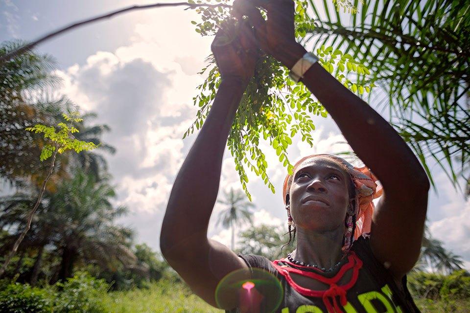 In Guinea, Through a grant from UN Women's Fund for Gender Equality, PREM has helped rural women form several cooperatives and taught its members how to plant a vitamin-rich tree called Moringa and how to clean, dry and sell its leaves with the help of solar technology. Used as medicine or a dietary supplement by societies around the world, Moringa also supports biodiversity and prevents soil erosion. Photo: UN Women/Joe Saad