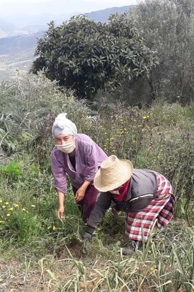 Mrs. Yamna Tazerbil (left) and Mrs. Rkia Boubker (right), members of Tudert Cooperative, cutting aromatic and medicinal plants to dry and to plant new ones in the nursery. Photo: UN Women/Tudert Cooperative.