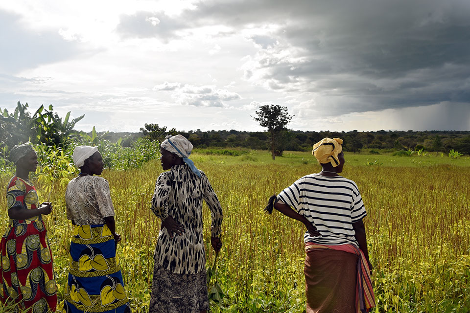 In 2019, women farmers in northern Uganda stand in a chia field they collectively harvest, aided with seeds from a UN Women project.  Uganda's 2021 Succession Amendment Bill addresses gender inequality in inheritance land rights and laws will now recognize women and girls as entitled to land and property.   Photo: UN Women/Eva Sibanda